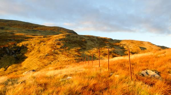 Photo of Evening sun enhancing colour of deer grass
