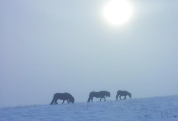 Photo of Wild ponies on Howgill Fells